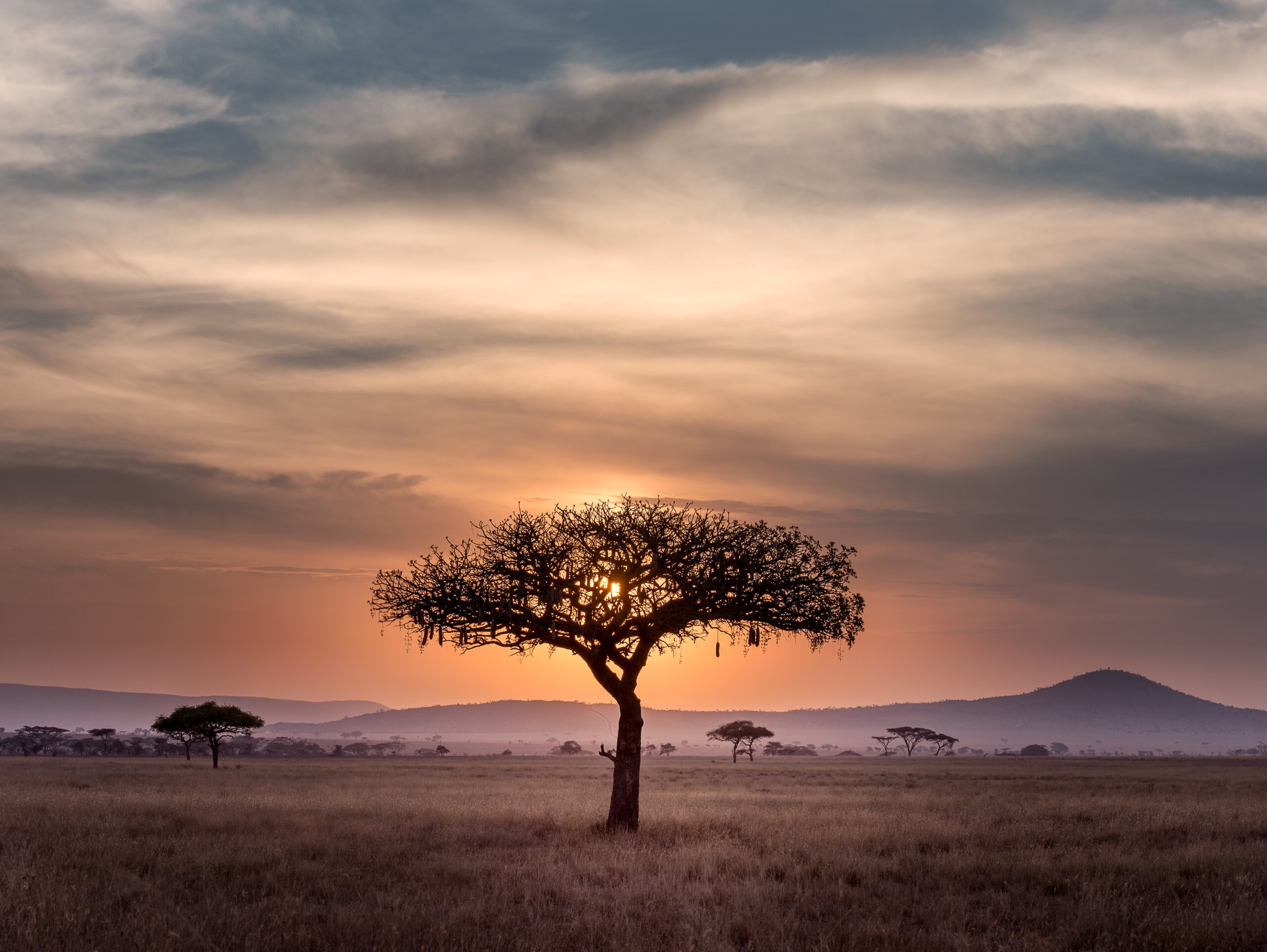 african sunset with a tree silhouette