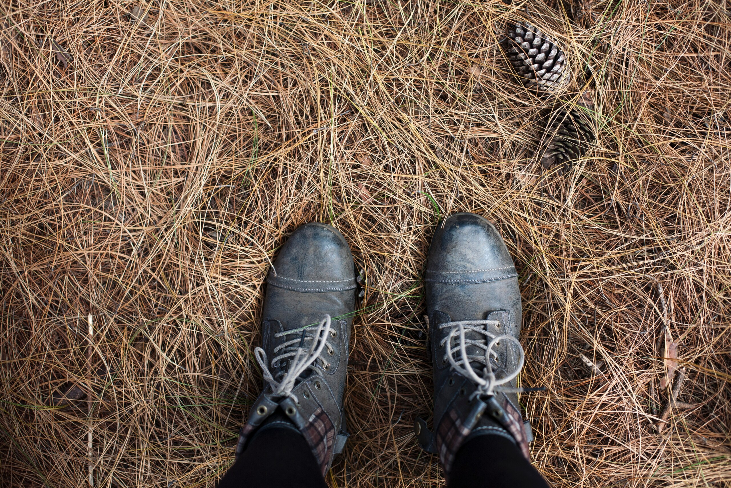 a pair of shoes standing in nature shot from above