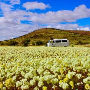 outback_kombi4